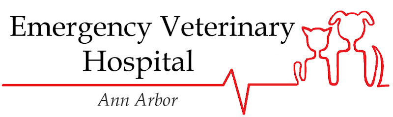 Emergency Veterinary Hospital